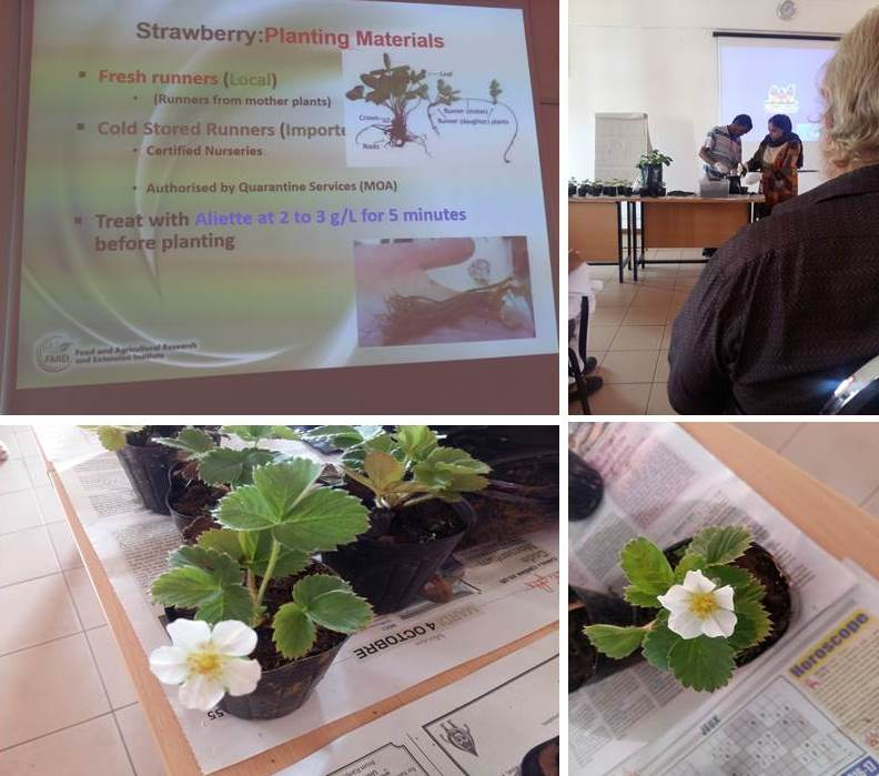 Presentation1 farei 1